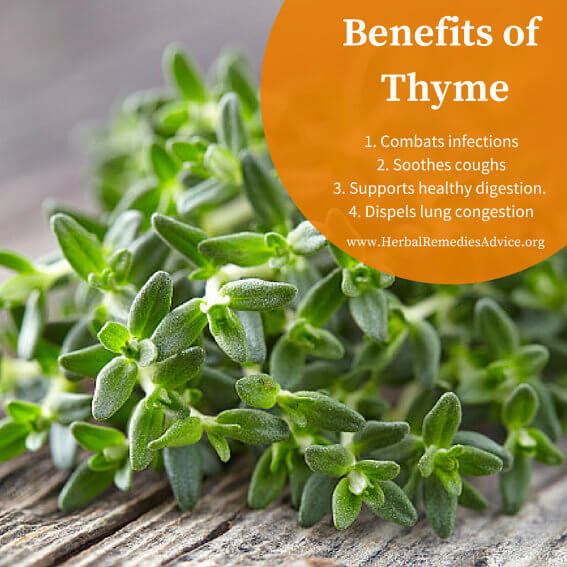 Thyme As A Home Remedy